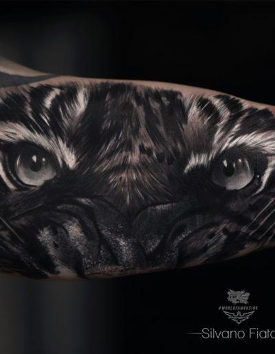 Silvano Fiato Tiger-min