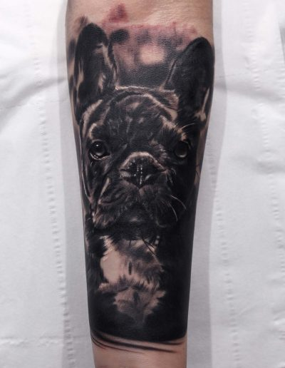 silvano fiato tattoo french bulldog